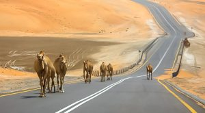 Where to Travel in UAE by Road?